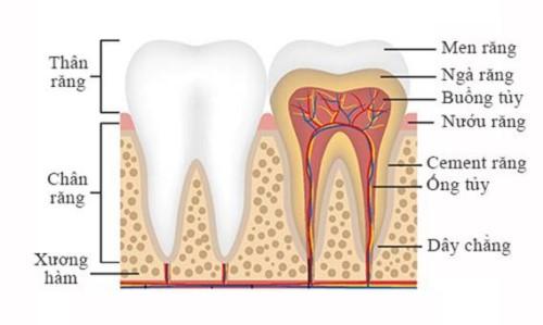 bọc răng sứ có phải lấy tủy không
